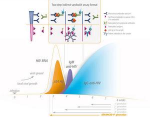 Hiv Antikörperbildung